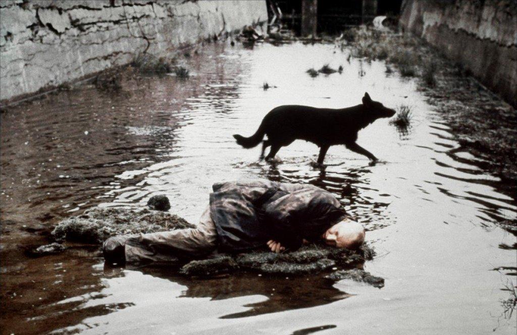RT @adalbertoasf: Stalker, Andrei Tarkovsky,…