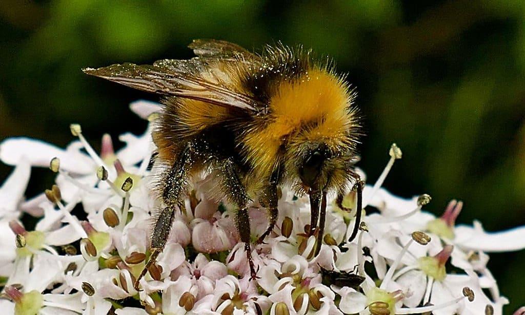 RT @TonysAngle: Bees worth billions:…