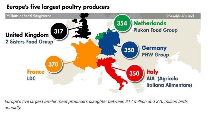 1.7 billion chickens slaughtered per…