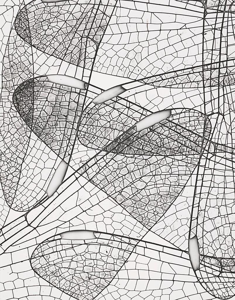RT @areasvellas: Andreas Feininger's Dragonfly…