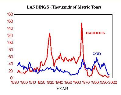 How cod & haddock landings…