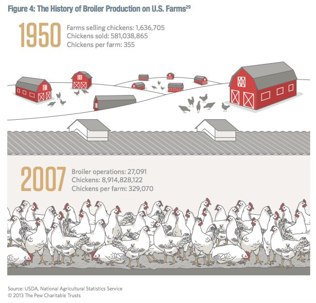 The growth of the chicken-industrial…