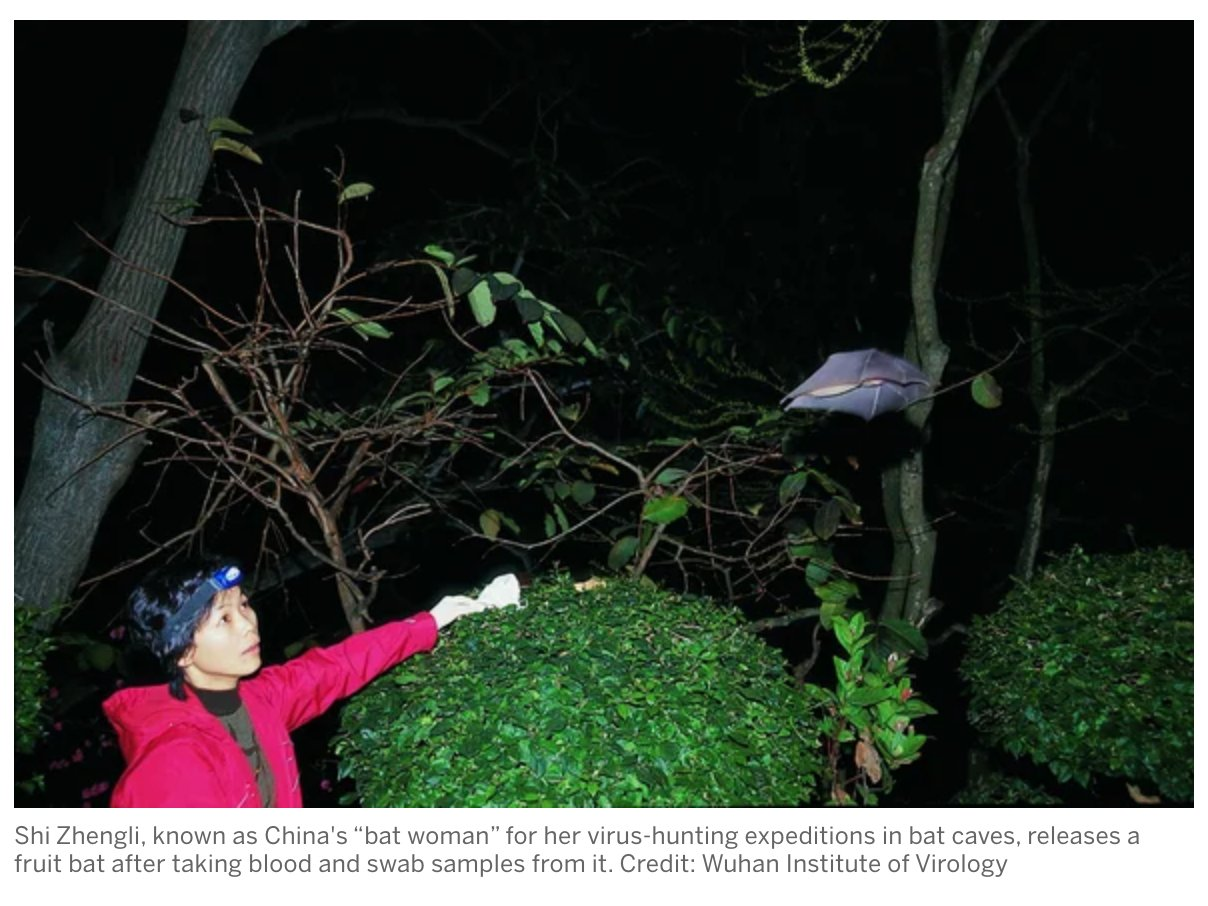 "How China's ""Bat Woman"" Hunted…"